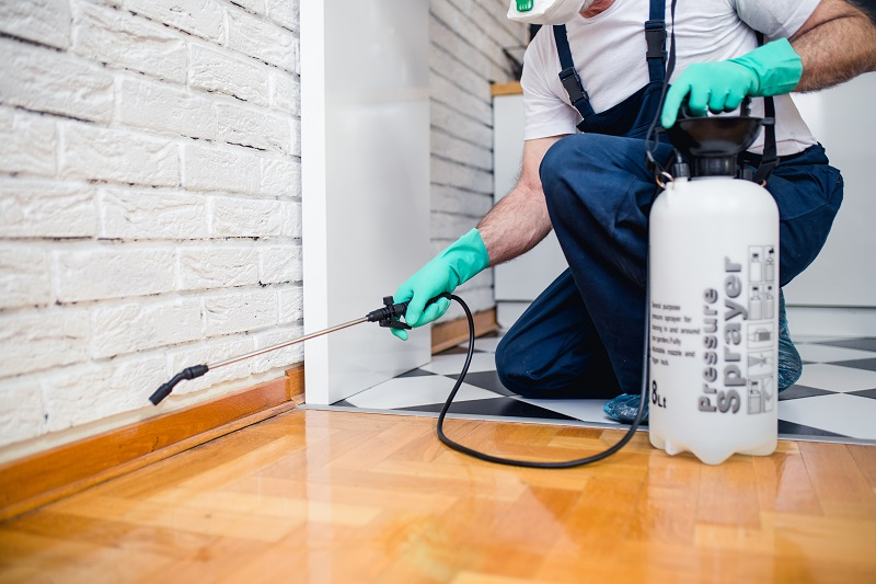 How to Control Pests in Your Home